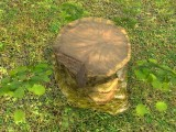 tree stump/baumstumpf