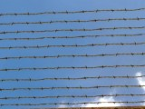 barbed wire/Stacheldraht created by Nikl