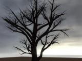 Dead tree (Toter Baum)