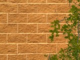 Brick_Wall created by Fox