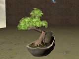 Bonsai Baum / Bonsai tree