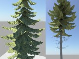 Conifer created by knoppas